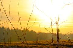 Żółty wschód słońca na łące Obrazy Royalty Free