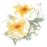 Żółtych róż akwareli wektoru ilustracje Fotografia Royalty Free