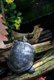 Żółw, Motyli konserwatorium Obraz Stock