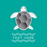 Żółw na turkusowym koloru tle Zdjęcia Stock
