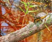 Żółw w bagna środowisku Zdjęcie Stock
