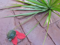 Żółw w czerwieni Fotografia Royalty Free