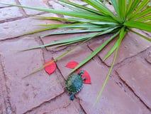 Żółw w czerwieni Obrazy Royalty Free