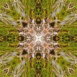 Żółwia abstrakt Zdjęcia Stock