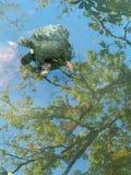 Żółwia model w świątynnym basenie obraz stock