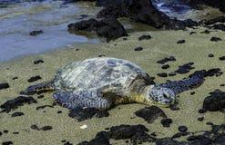 Żółwia Relaksować Obrazy Stock