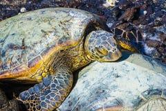 Żółwia zakończenie zdjęcia royalty free