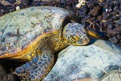 Żółwia zakończenie Fotografia Stock