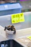 Żółwia zwierzę domowe na sprzedaży przy Dzwoniącą Choi ulicą, Hong Kong Fotografia Stock