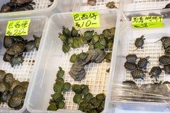 Żółwia zwierzę domowe na sprzedaży przy Dzwoniącą Choi ulicą, Hong Kong Obrazy Royalty Free