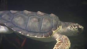 Żółwie, Tortoises, gady, zwierzęta, przyroda zdjęcie wideo