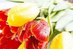 Żółci czerwoni tulipany Obraz Stock