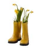 Żółci daffodils i gumowi buty Zdjęcie Stock