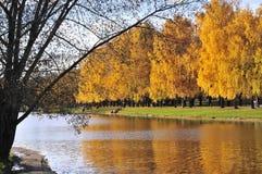 Żółci drzewa Zdjęcia Royalty Free
