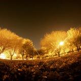 Żółci drzewa Fotografia Stock