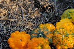 Żółci Pattypan kabaczki Obrazy Stock