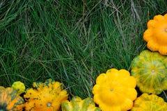 Żółci Pattypan kabaczki na trawie Fotografia Royalty Free