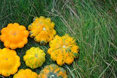Żółci Pattypan kabaczki na trawie Fotografia Stock