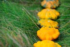 Żółci Pattypan kabaczki na trawie Zdjęcie Royalty Free