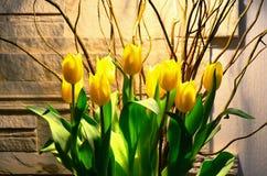 Żółci tulipany Zdjęcie Stock