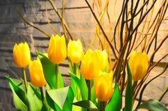 Żółci tulipany Fotografia Royalty Free
