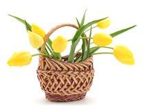 Żółci tulipany Zdjęcia Stock