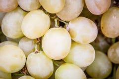 Żółci winogrona Obraz Royalty Free
