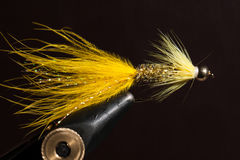 Żółci wooly bugger Fotografia Stock