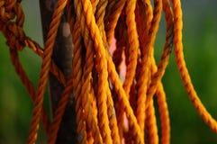 Żółta arkana Fotografia Royalty Free