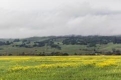Żółta dolina II Zdjęcia Royalty Free