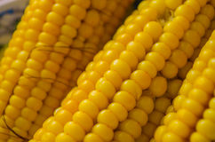 Żółta kukurudza Zdjęcie Stock
