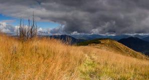 Żółta trawa Zdjęcie Stock