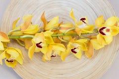 Żółte cymbidium orchidee na drewno talerzu Zdjęcia Stock
