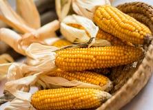 Żółte kukurudze w koszu Zdjęcia Royalty Free