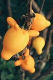 Żółte owoc Obraz Stock