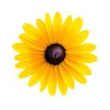 Żółty chamomile Zdjęcie Royalty Free