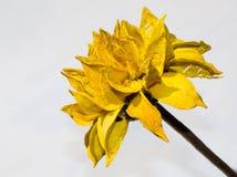 Żółty drewniany kwiat obrazy stock