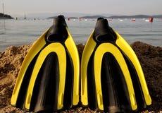 Żółty i czarny barwiony flipper nad piaskami Obraz Royalty Free