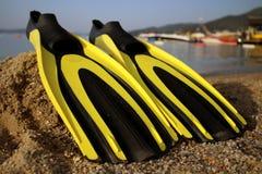 Żółty i czarny barwiony flipper nad piaskami Fotografia Royalty Free