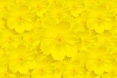 Żółty kosmosu kwiat Zdjęcia Stock