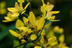 Żółty kwiat Fotografia Royalty Free