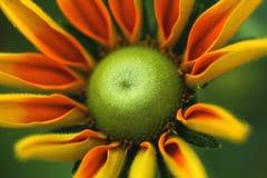Żółty kwiat Zdjęcie Royalty Free