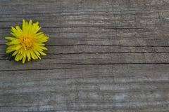 Żółty kwiat na drewnianym tle Obraz Royalty Free