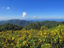 Żółty kwiatu wzgórze Zdjęcia Stock