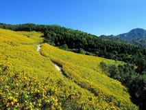Żółty kwiatu wzgórze Obrazy Royalty Free