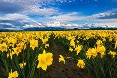 Żółty Na zawsze Fotografia Royalty Free