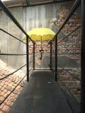 Żółty parasol Fotografia Royalty Free