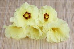 Żółty Portia kwiat fotografia stock