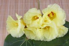 Żółty Portia kwiat zdjęcia royalty free