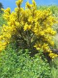 Żółty spokojna Zdjęcie Royalty Free